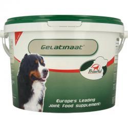 Gelatinaat hond